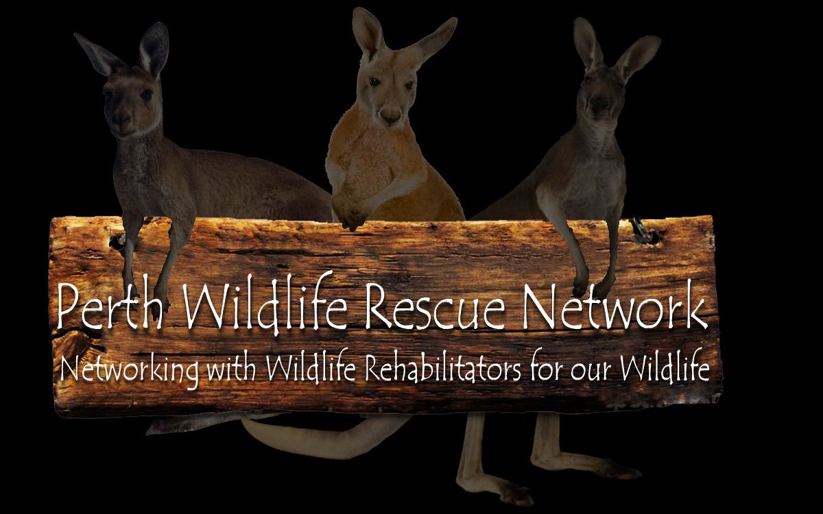 Perth Wildlife Rescue Network